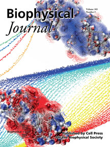 Biophysical Journal July 18 Cover