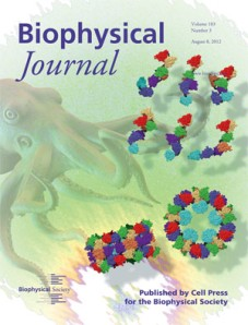 Cover of the Aug. 3rd Biophysical Journal