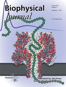 BiophysJ Cover Image - Sept. 4