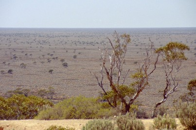 Nullabor_Plain_With_Trees